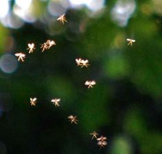 Could these tiny winged creatures be real fairies? | British Man Claims To Have Photographed Actual Fairies