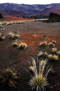 ✯ View from the floor of Haleakala Crater - Hawaii