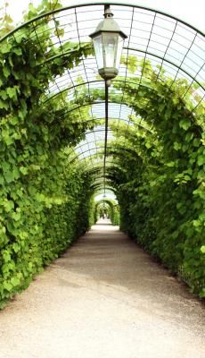 Photo about Vine arbor tunnel in garden Rundale Latvia. Image of history, covered, pergola - 6338202 Garden Arbor, Garden Trellis, Garden Paths, Garden Mulch, Wire Trellis, Conservatory Garden, Garden Beds, Garden Structures, Front Yard Landscaping