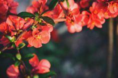 Spring Flowers by Radu Muresanu on 500px