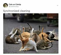 Cute and Funny Animal Photos Picked Just For You - cat yoga Funny Cats, Funny Animals, Cute Animals, Cute Kittens, Cats And Kittens, Funny Animal Photos, Feral Cats, Tier Fotos, Domestic Cat