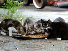 Not only does TNR work; the approach is humane