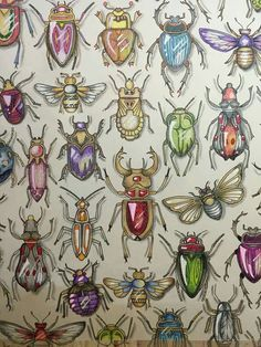Colouring Techniques Animal Patterns Johanna Basford Secret Garden Colored Pencils Gardens Prismacolor Adult Coloring Forests Bugs