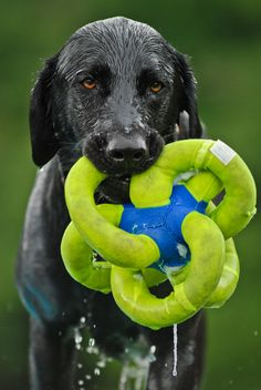 Go home? Stop swimming? Cease play with my new green squishy pretzel? Do I look ready for any of these?  Follow us and sign Up to get cool products like this sent right to your email!  http//lab.furandcollar.com