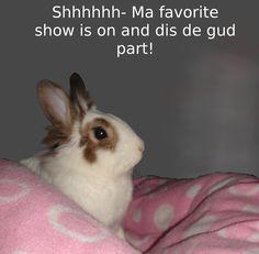 funny bunny watchin tv