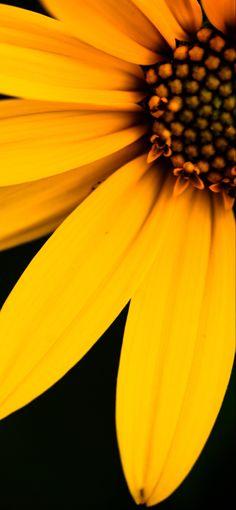 Fall Yellow Flower Phone Wallpaper