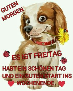 guten morgen bilder am freitag - Gb Bilder Good Morning Funny Pictures, Morning Pics, Friday Pictures, Mystery, Free Episodes, Picture Comments, Diabetic Dog, Morning Humor, Dog Snacks