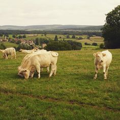 cant waith to lay my eyes on this breathtaking view. My Eyes, Places To See, Cow, France, Pictures, Animals, Life, Photos, Animales
