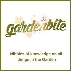 """Garden Bite is a place to find practical tips peppered with personality. Teri Knight believes the garden is a place to learn, to play, to contemplate, to renew your mind, body, and spirit. The whole concept of """"Garden Bite"""" is to share gardening basics (and beyond) with those who want to get their hands dirty but might be a little apprehensive. It's not about perfection, it's about enjoying the road to it! National Garden Bureau Wild Edibles, Grow Your Own Food, Simple Pleasures, Garden Planning, Gardening Tips, Garden Products, Place Card Holders, How To Plan, Knight"""