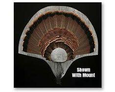 NW621 Turkey Mounts, Turkey Fan, Turkey Calling, Turkey Hunting, Wood Dust, Round Corner, Taxidermy, Barn Wood, Bugs