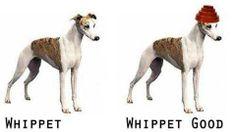 #Devo #whipit #good #joke
