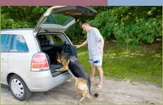 How to Become a Better Dog Trainer Through Tricks