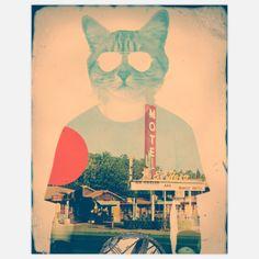 Ali Gulec - Cool Cat