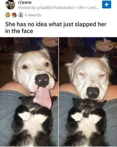 5 r/aww Posted by u/SadBoiThatEatsKoi She has no idea what just slapped her in the face - iFunny :) - Funny Animals Cute Animal Memes, Funny Animal Quotes, Cute Animal Photos, Animal Jokes, Funny Animal Pictures, Cute Funny Animals, Funny Cute, Hilarious Animal Memes, Animal Captions