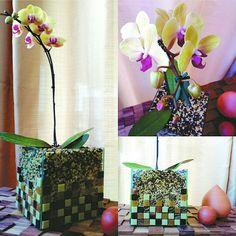 Linha Lounge Orquídea Floreira Terra Glass Vase, Lounge, Plants, Home Decor, Line, Gifts, Celtic, Flowers, Airport Lounge