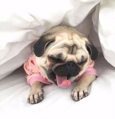 This is how I feel in the morning! Pug Life.