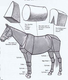 "Here's a helpful analysis of the main forms in a horse's body. The basic shapes to remember: ""Wedge, barrel, saddle.""    An even simpler ana..."