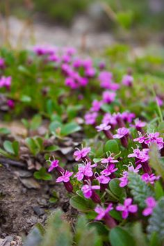 Can you name these Wildflowers?