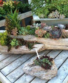 plante suculente 10