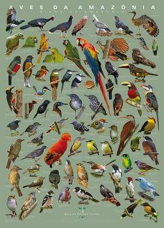 Amazonia's Birds
