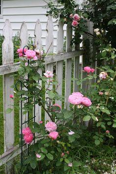 42 Ideas For Garden Fence Gate Pink Roses Garden Wedding Games, Wedding Ideas, White Picket Fence, Picket Fences, Shabby Chic Patio, Bush Garden, Garden Planter Boxes, Window Plants, Farmhouse Garden