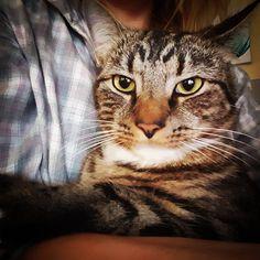 #cats #catseyes #catstagram #catsagram #catslovers #tabbycat #catswithcharacter