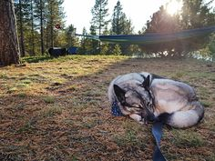 My Gråhund Britt Rainy Morning, Power Nap, Go Outdoors, Sleeping Dogs, Falling Down, Past, Horses, Autumn, Sweden