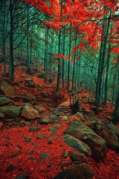 Autumn   Merca Michael