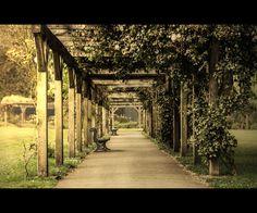 Secret Path by Daniel Allison, via 500px
