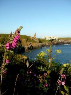 Pembrokeshire Coast Path Spring Flowers