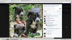 Has only until today, 03/30/16.  Please, is anybody out there???  Leann is at the Rocky Mt. North Carolina Animal Shelter, please contact Laura at foranimals2002@aol.com, or go to Petfinder.com and enter petdetail/34778865 for further information.  Thank you.