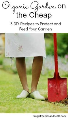 Organic Garden on the Cheap: Protect and Feed Your Garden for Pennies!
