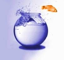A fish out of water :)