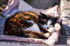 https://flic.kr/p/smTmGH | Levada Katze | http://noctilon.tumblr.com https://twitter.com/noctilon https://500px.com/noctilon https://www.facebook.com/noctilon/ | #photography #animal #cat #madeira