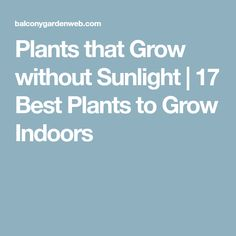 Plants that Grow without Sunlight | 17 Best Plants to Grow Indoors