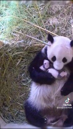 Baby Animal Videos, Pet Videos, Funny Animal Videos, Funny Animal Pictures, Videos Funny, Cute Wild Animals, Cute Funny Animals, Animals Beautiful, Funny Dogs