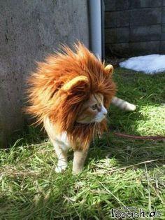 Ich hätte so gerne einen weissen Löwen mit rosa mähne...