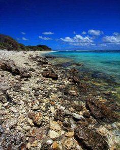 #bliss #ladyelliotisland #australia #australiagram #qld #greatbarrierreef #seeaustralia #thisisqueensland #wanttogoback #southerngreatbarrierreef #Snorkel #fish #coral #beach #simplyadventure #underwater #underwaterphotography #underthesea #goprohero4silv