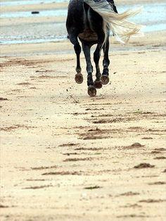 Galloping on the beach - Laytown Horses, Sun, Beach, Animals, Animales, The Beach, Animaux, Seaside, Animais