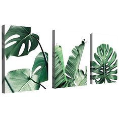 Canvas Wall Art Green Leaf Simple Life Painting Dathroom Wall Decor Monstera Plant 3 Pieces Framed Canvas Pictures Contemporary Watercolor Artwork Ready to Hang for Home Decoration Office Wall Decor Leaf Wall Art, Leaf Art, Canvas Frame, Canvas Wall Art, Canvas Prints, Plant Painting, Plant Art, Spray Painting, Life Paint