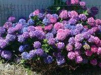 flores y colores :D: Tipos de flores y sus significados