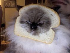 Putting bread on your cat, so that people think you have a walking sandwich.