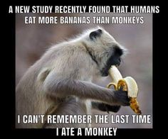 A new study found out that we humans eat more bananas than monkeys. I can't remember the last time I ate monkeys Cheesy Jokes, Corny Jokes, Funny Puns, Sarcastic Humor, Haha Funny, Funny Stuff, Funny Dad Jokes, Food Jokes, Stupid Jokes