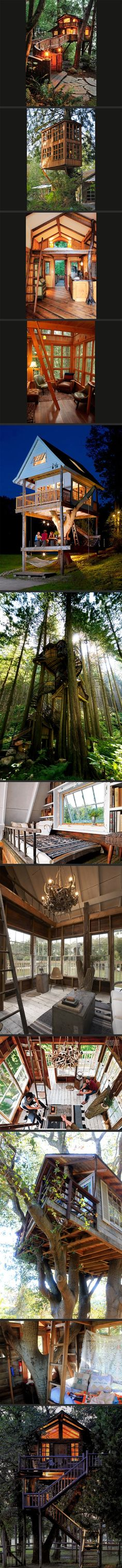 Tree house hotel rooms.
