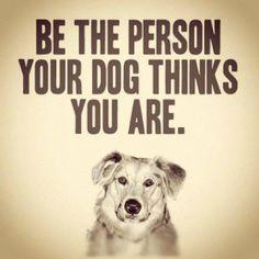 #rescuedog #dog #itsarescuedoglife