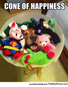 The Cone That Makes It All Better