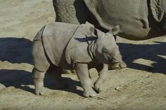 WATCH: Baby Rhino Enjoys the Outdoors for the First Time [Aww Cute LOL]