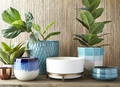 5 Easy Ways To Refresh Your Home — HomeSense cute pots for plants