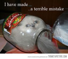 I'm horrible for laughing at this poor cat, but ha!