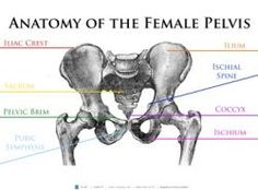 This Anatomy of the Female Pelvis poster provides a visual diagram of the female pelvis.